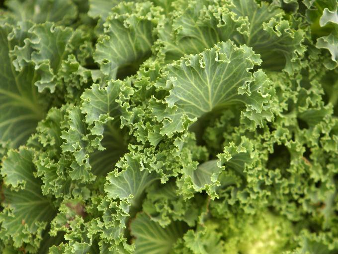 10 beneficios del kale | Salud180