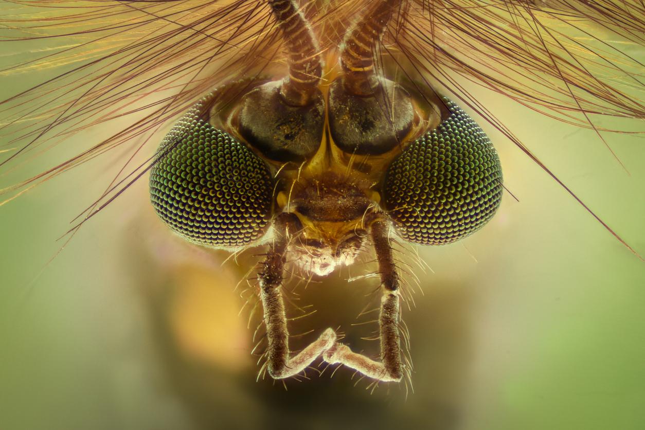 Remedios caseros para evitar picaduras de mosquitos