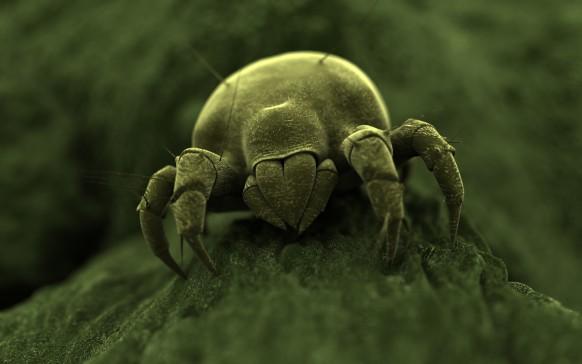 Este ácaro podría vivir en tus pestañas, cejas y barba
