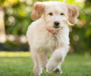 5 enfermedades más comunes que padecen los perros