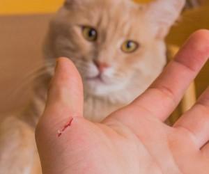 ¡Cuidado con los arañazos de tu gato! Podrían causarte disfunción eréctil temporal...