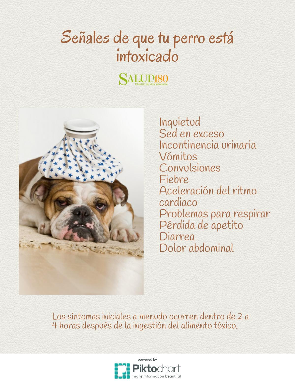 sintomas de intoxicación por alimentos en perros