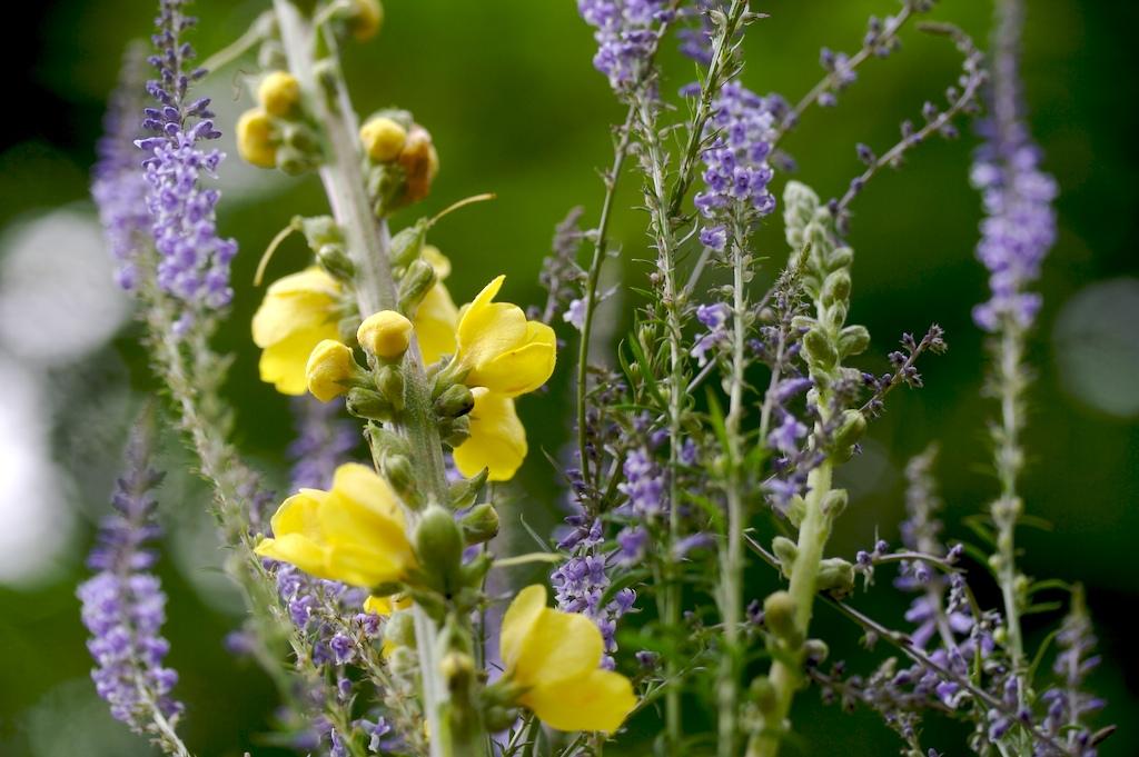 El poder curativo de las plantas medicinales | Salud180