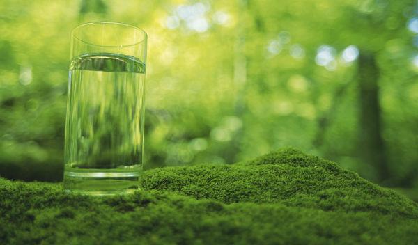 clorofila liquidia adelgazar la
