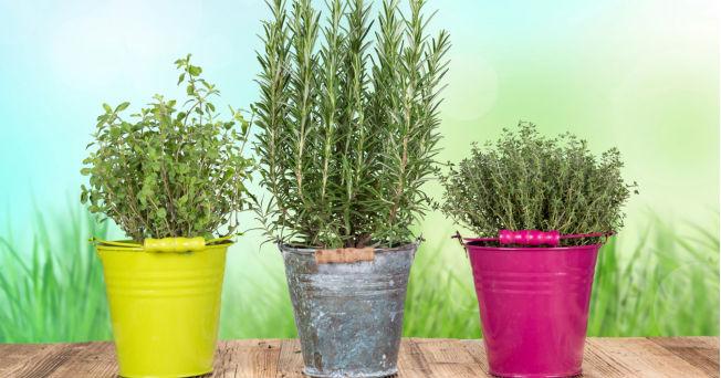 especias y hierbas que curan la diabetes