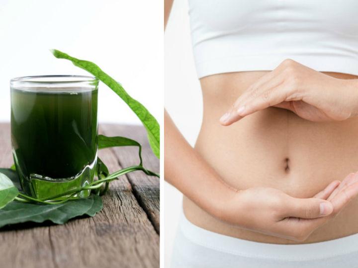 Tomar clorofila ayuda a bajar de peso