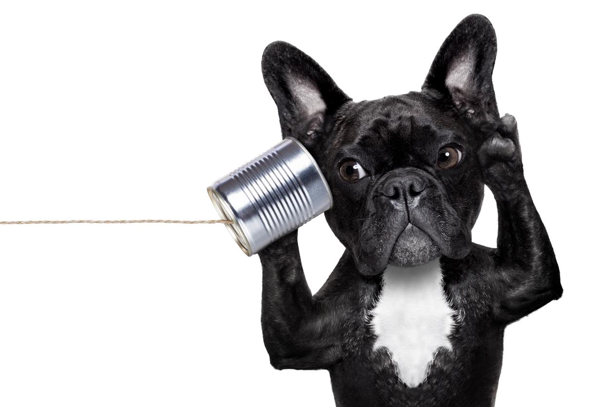Tu perro entiende lo que le dices, ¡científicamente comprobado!