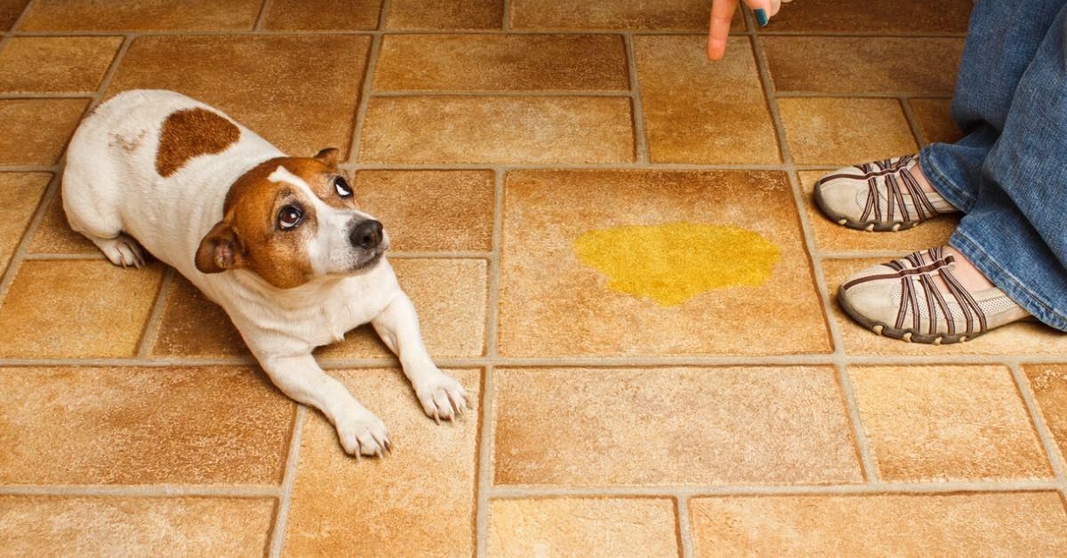 ¿Por qué mi perra orina con frecuencia?