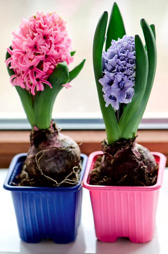cómo hacer que mi planta florezca