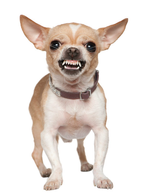 Tu perro podría odiar a tu ex