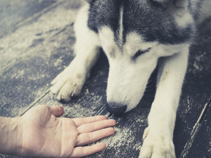 ¿Perros pueden oler y detectar el cáncer?