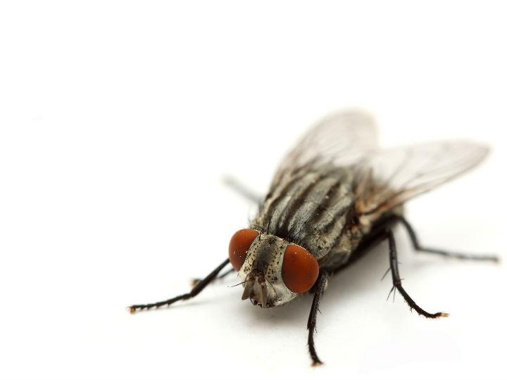remedio-casero-para-eliminar-moscas-mosquitos-y-cucarachas-en-dos-horas-salud180