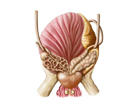Los dolores en la parte izquierda inferior de los riñones