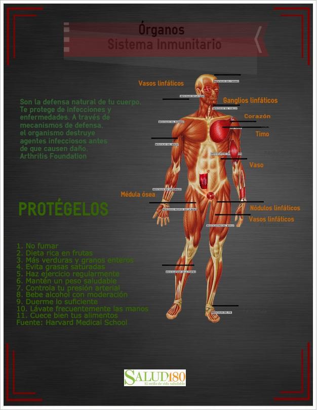 Resultado de imagen de sistema inmune-alimentacion