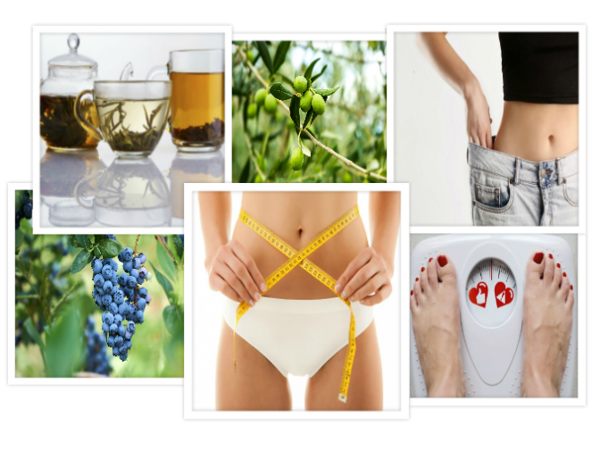 Plantas medicinales vs sobrepeso y obesidad