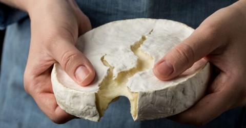 Brucelosis El Peligro Que Se Esconde En Tu Gusto Por Comer Lacteos