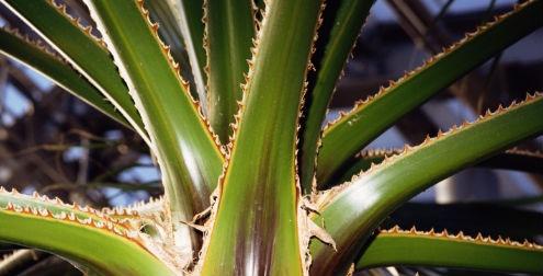 Aloe Vera No Sólo Cura La Piel Salud180