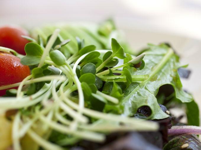 Como preparar la alfalfa para adelgazar