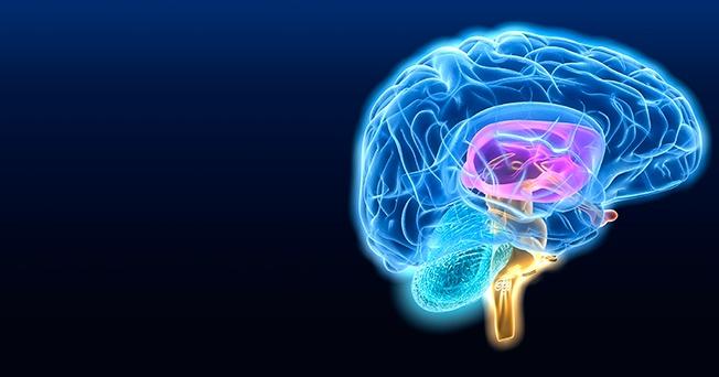 En qué momento muere tu cerebro? | Salud180