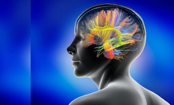 Cómo reacciona el cerebro a los colores? | Salud180