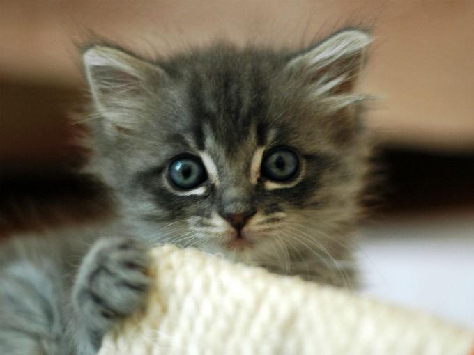 Por Qué Sientes Amor Por Los Gatos Salud180