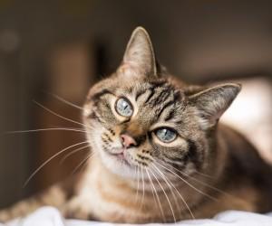 Beneficios para tu salud de tener un gato