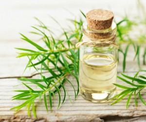 5 usos del aceite del árbol del té, ¡que no conocías!