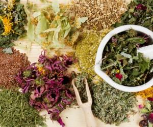 Las mejores plantas medicinales para controlar la diabetes. ¡Bájale al azúcar en tu sangre!