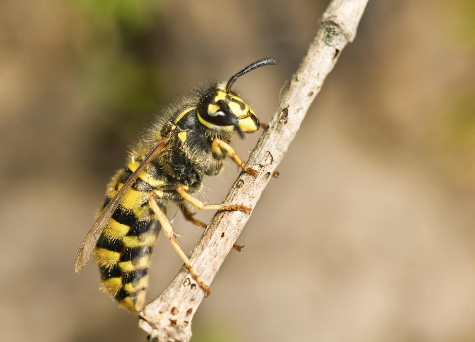 5 insectos peligrosos para los humanos   Salud180